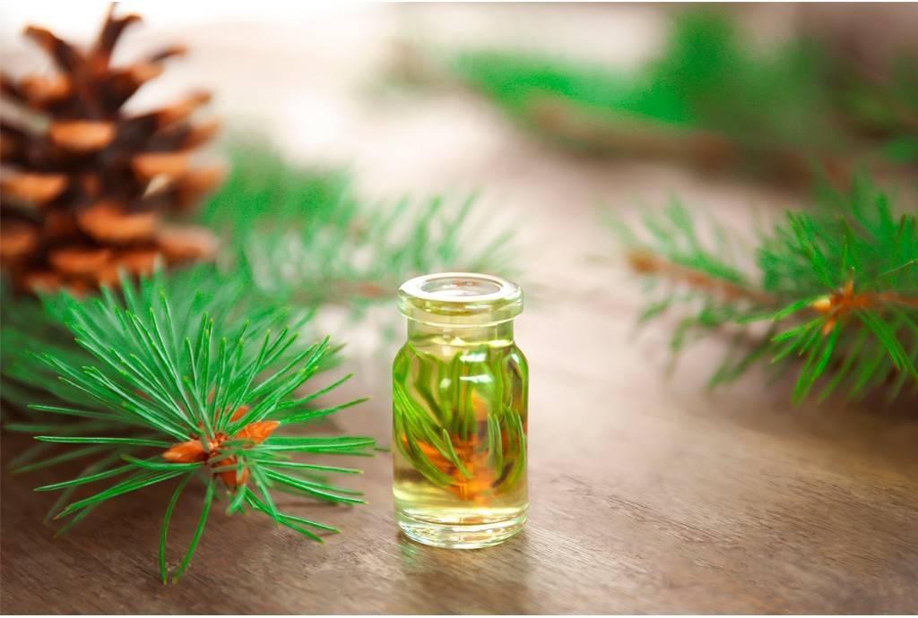 Эфирное масло кедра: свойства, применение и полезные рецепты