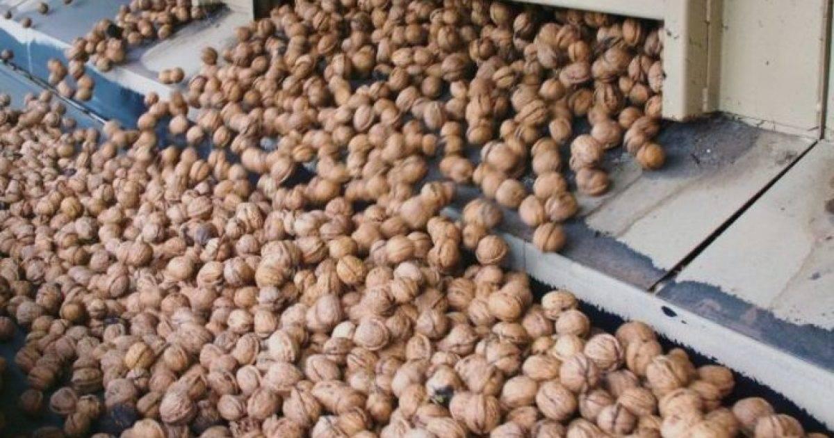 Бизнес-идея — выращивание фундука