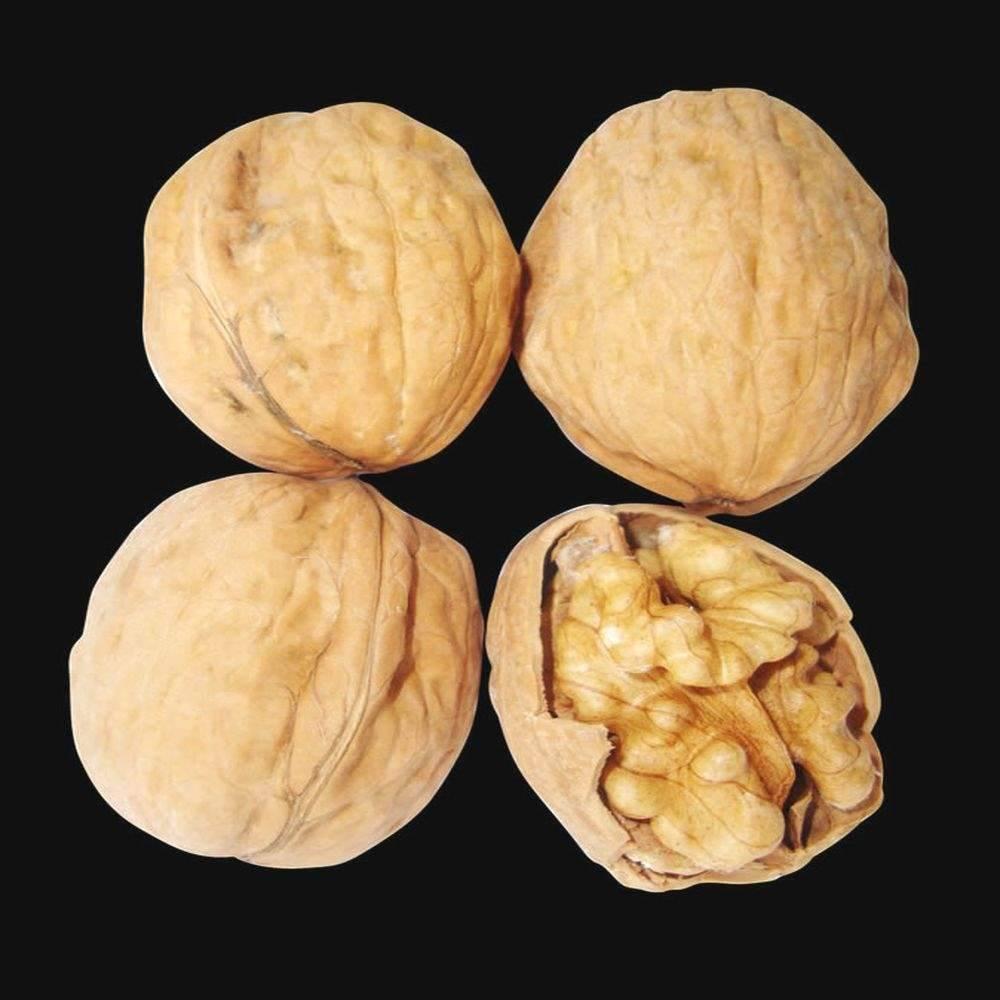 Сорта грецкого ореха: описание 35 лучших разновидностей, посадка и уход