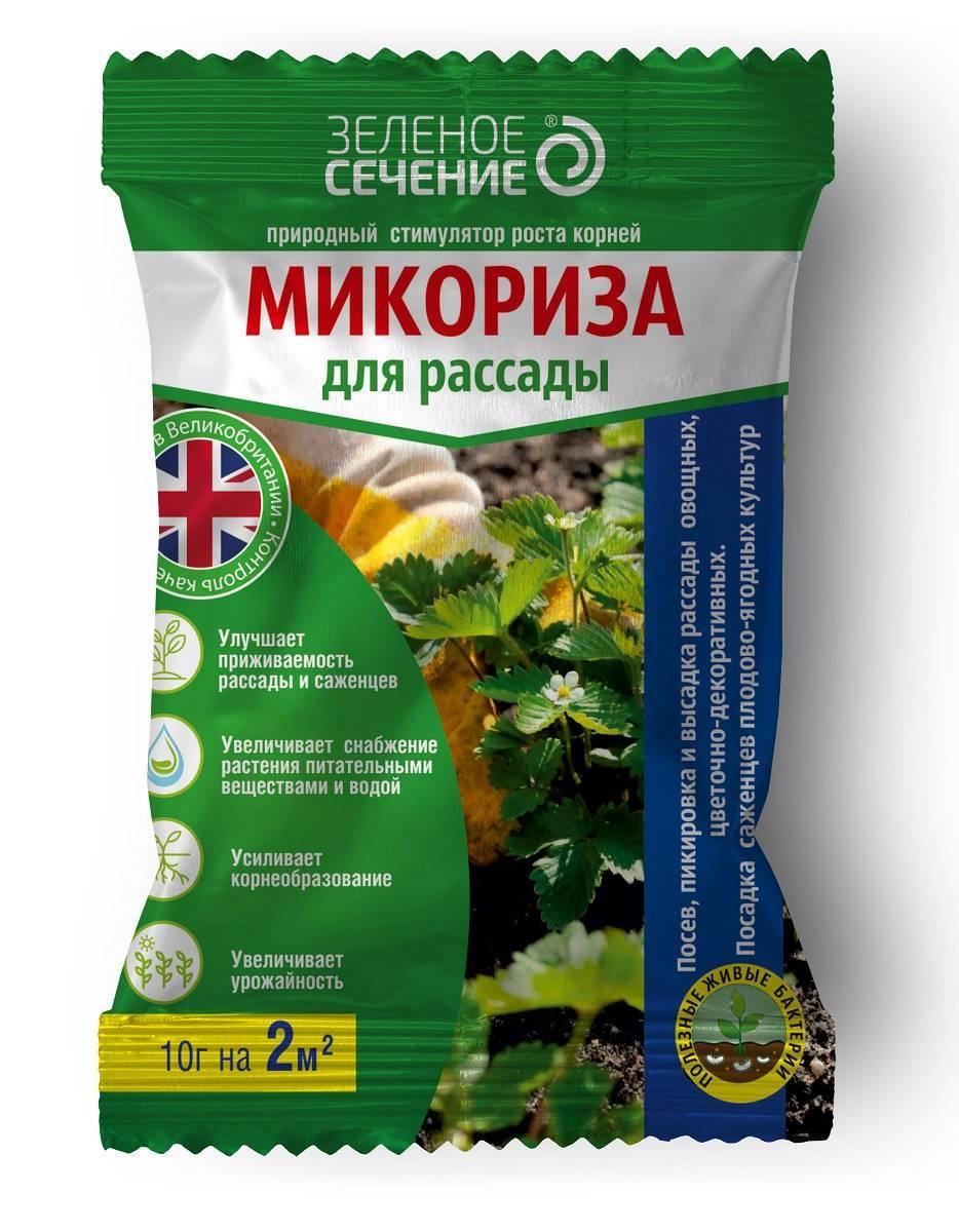 Микориза - почва под грибным соусом