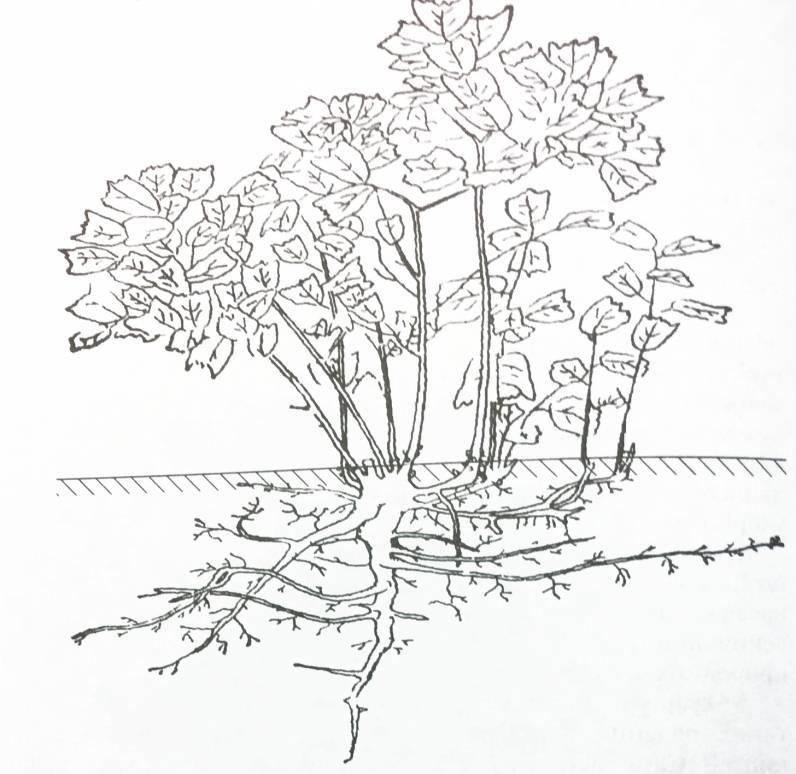 Как правильно выбрать участок под сад фундука