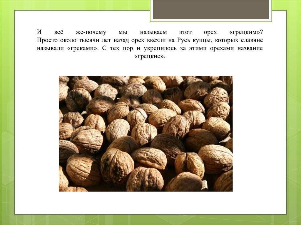 Сорт грецкого ореха с тонкой скорлупой