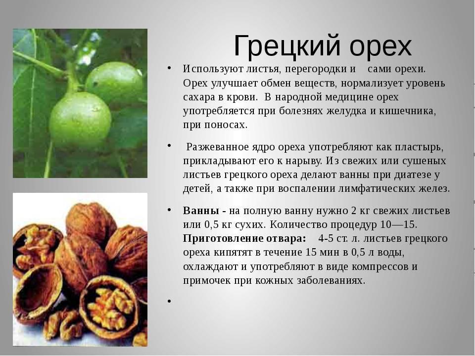 Грецкий орех выращивание и уход из ореха