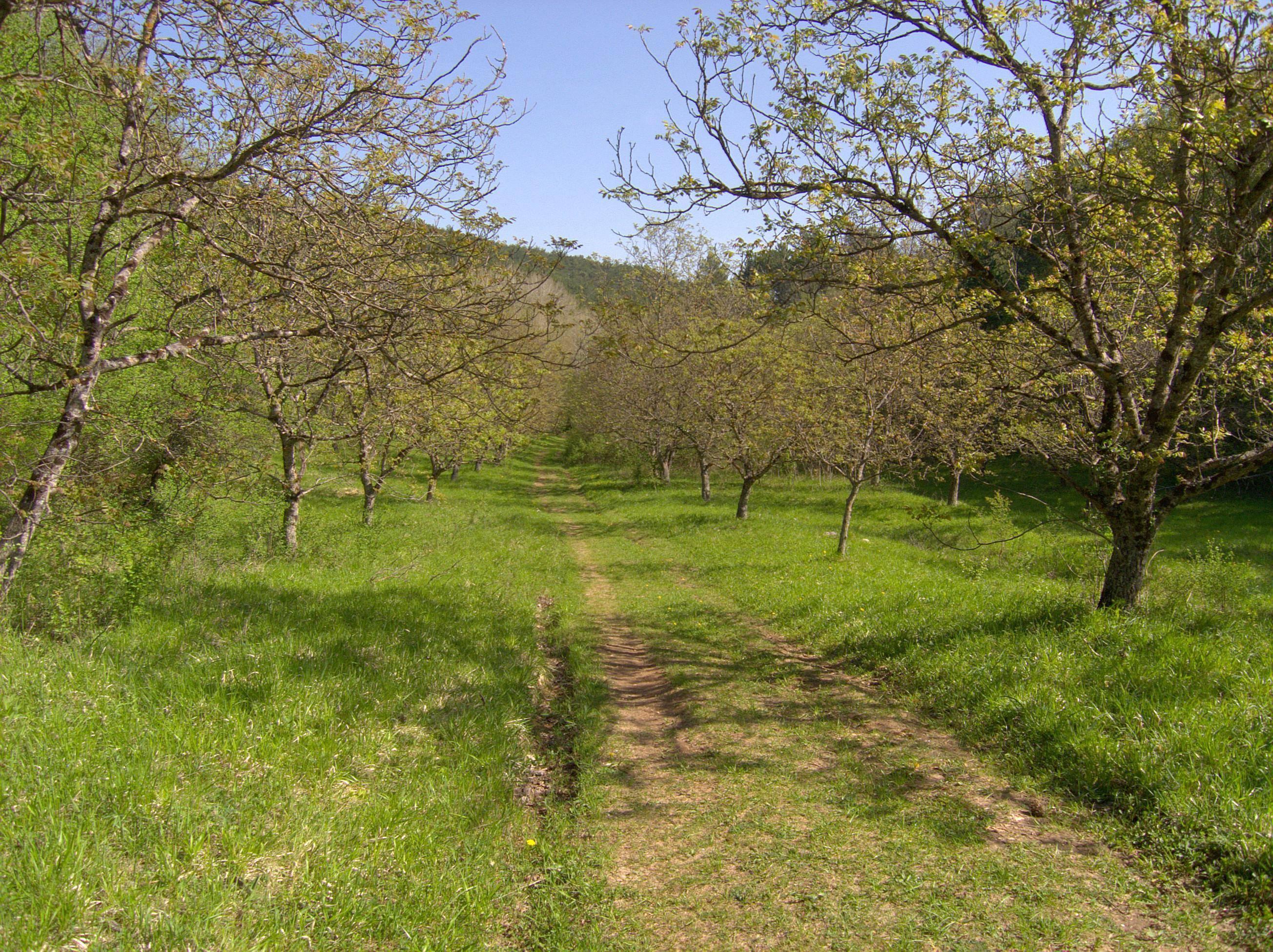 Ореховые сады в украине: реалии и персективы — портал ореховод