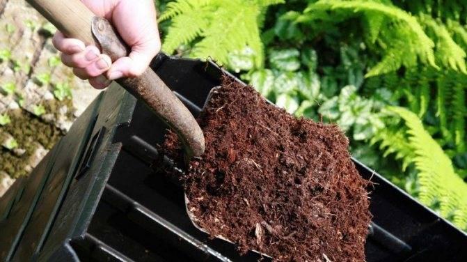 Что делать осенью с сидератами, когда сеять и нужно ли закапывать