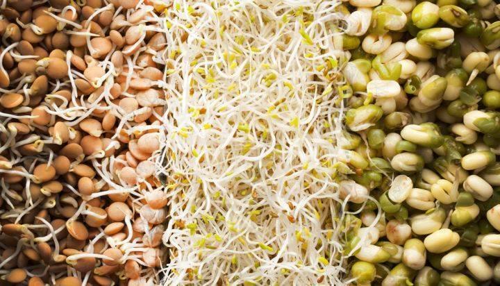Сырые проростки: польза и потенциальный вред
