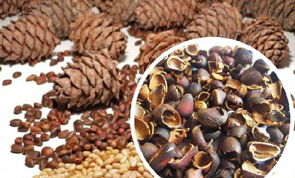 Орехи кедровые шишки