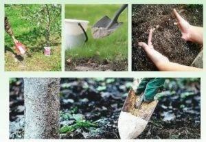 Подкормка деревьев: как, когда и каким удобрением выполнять