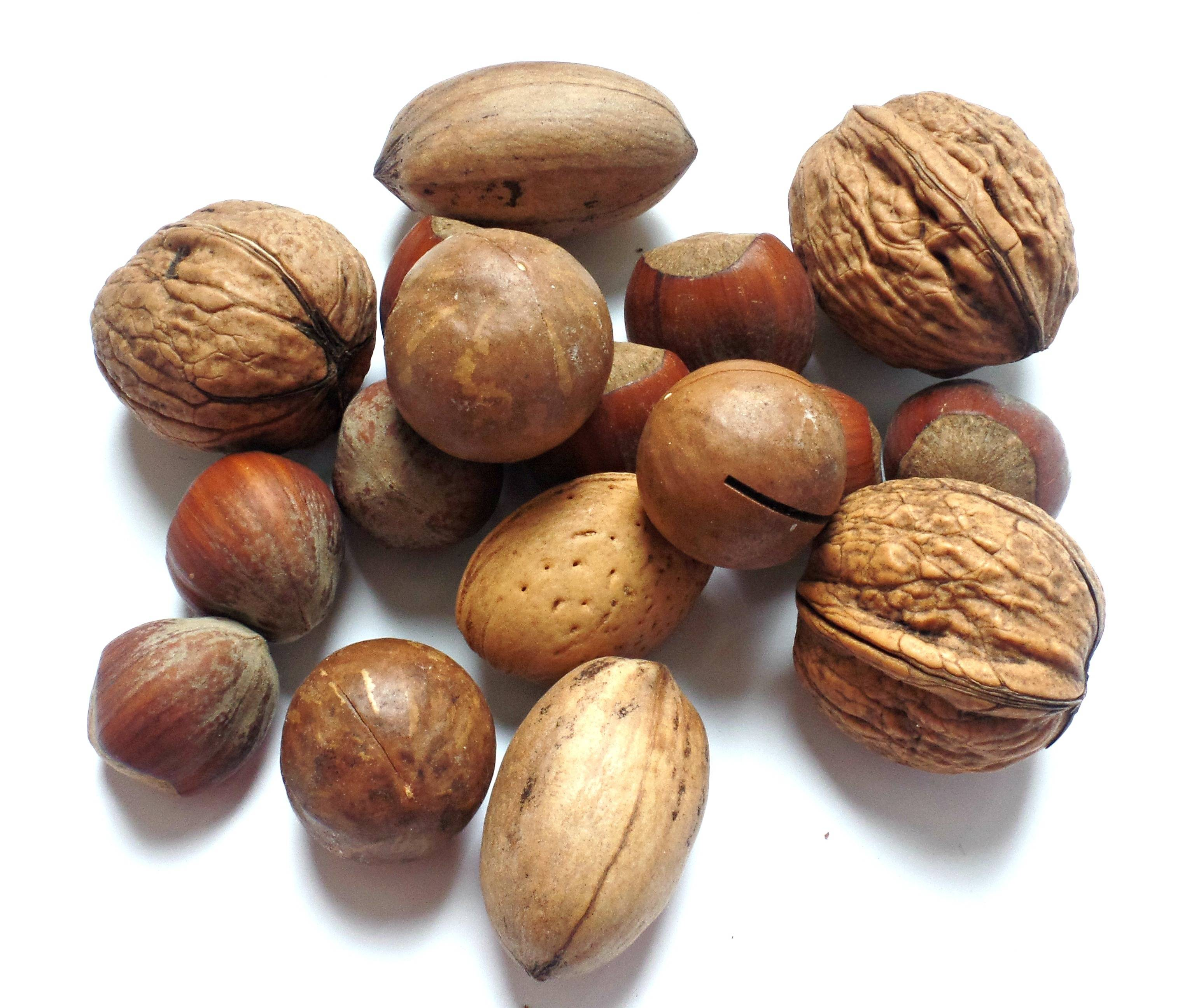Виды орехов: популярные сорта, особенности применения и свойства орехов (90 фото)