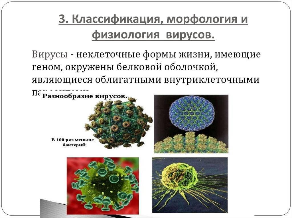 Лекция №5 морфология и систематика микроорганизмов - студизба
