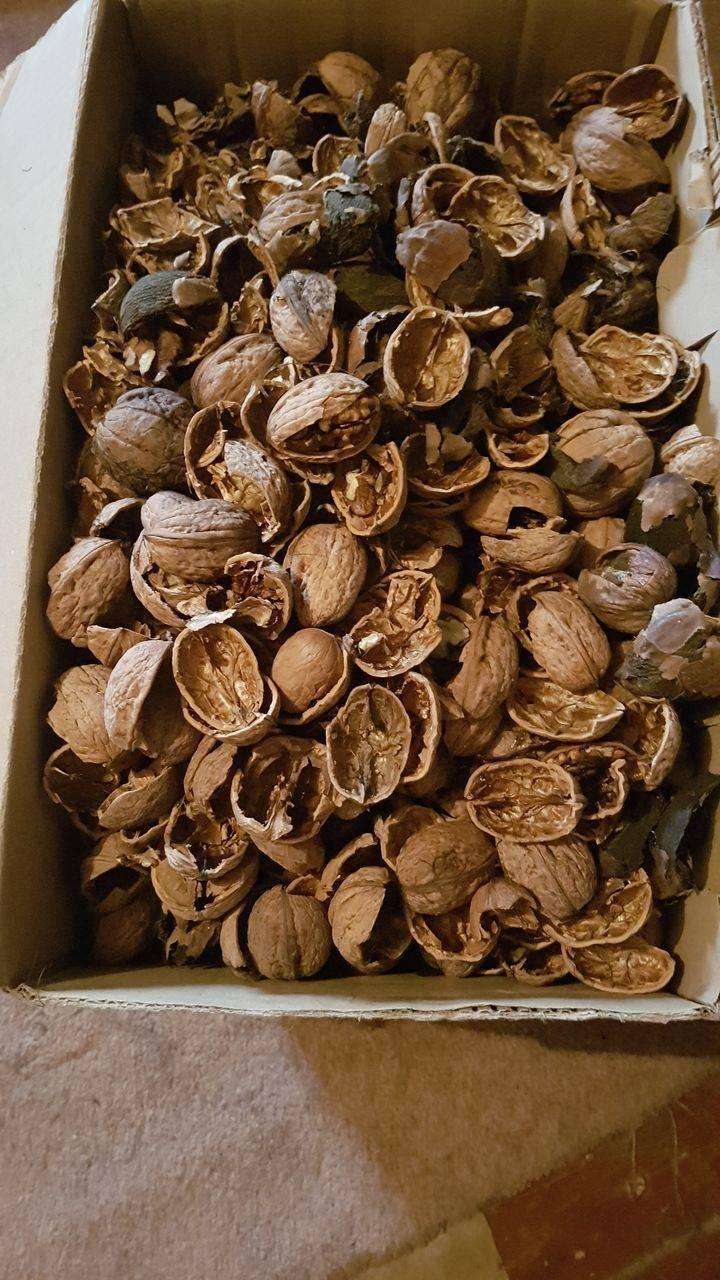 Есть ли применение в саду или огороде отходам зеленого грецкого ореха