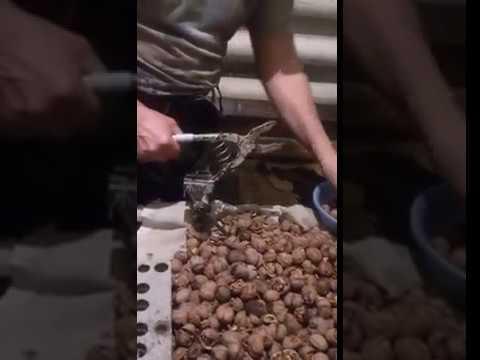 Как быстро и легко почистить орех фундук от скорлупы сомому