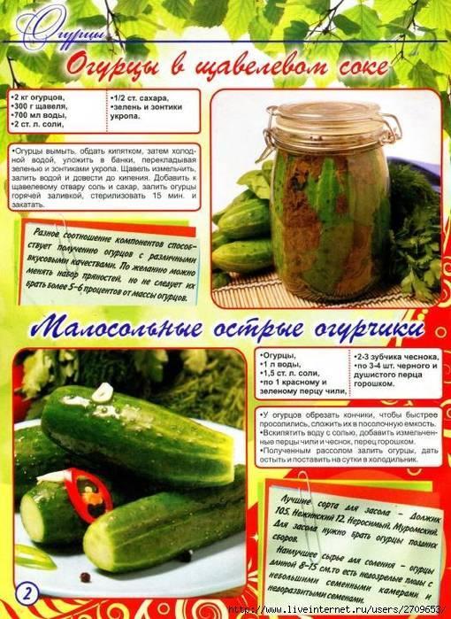 Сладкие огурцы на зиму: 7 рецептов маринованных хрустящих огурцов
