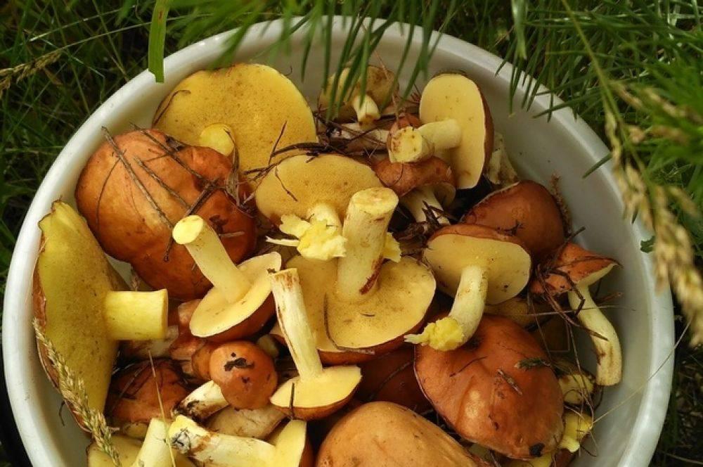 Вкусная икра грибная на зиму из вареных, сушеных, замороженных, соленых грибов и ножек маслят, белых грибов, подосиновиков, подберезовиков, шампиньонов, сыроежек, груздей, моховиков: лучшие рецепты