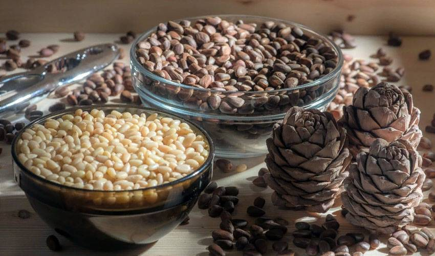 Как хранить кедровые орехи: очищенные, в шишках, в скорлупе