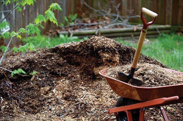 Грецкий орех: как выбрать место, правильно посадить и выростить.