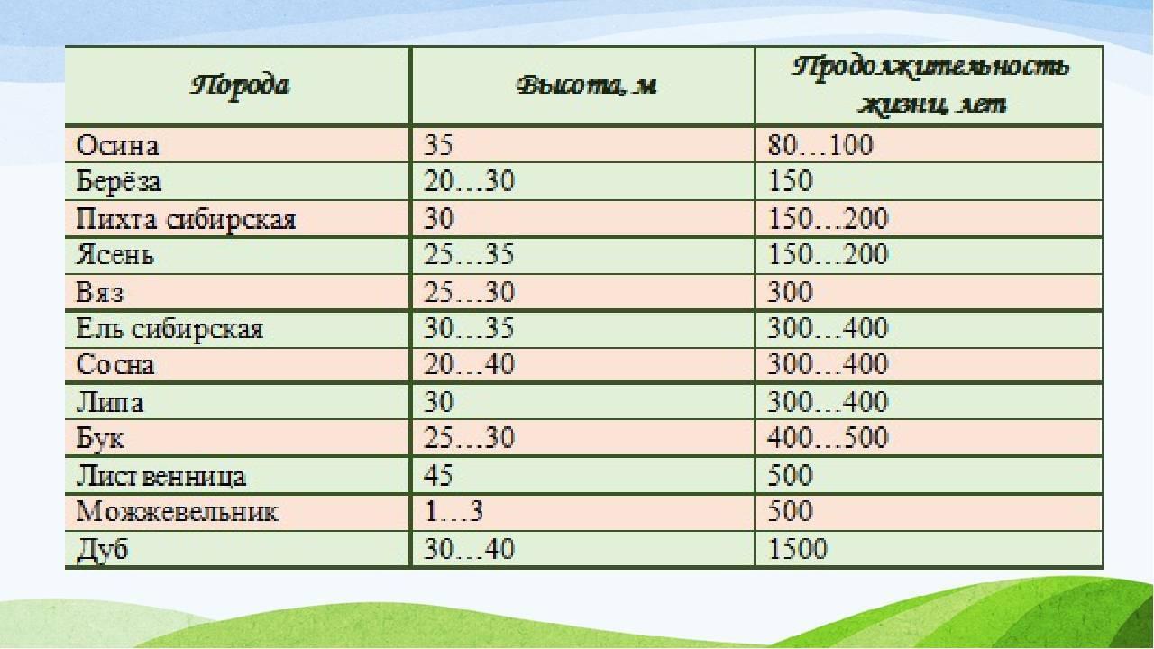 Интересные особенности грецкого ореха: сколько лет растет, продолжительность жизни и другие нюансы