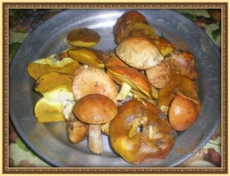 Засолка грибов на зиму – 5 домашних рецептов приготовления