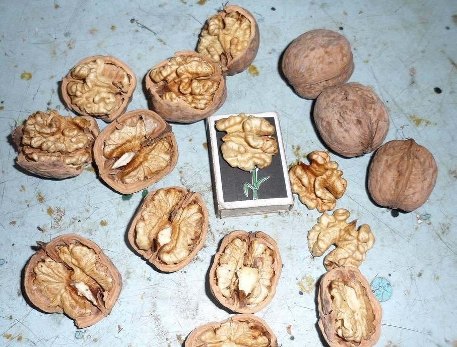 Грецкий орех — описание, полезные и вредные свойства, состав, калорийность, рецепты, способы посадки