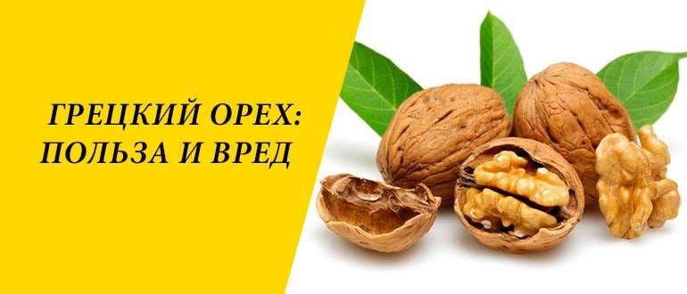 Грецкий орех: польза и вред для организма. народные рецепты
