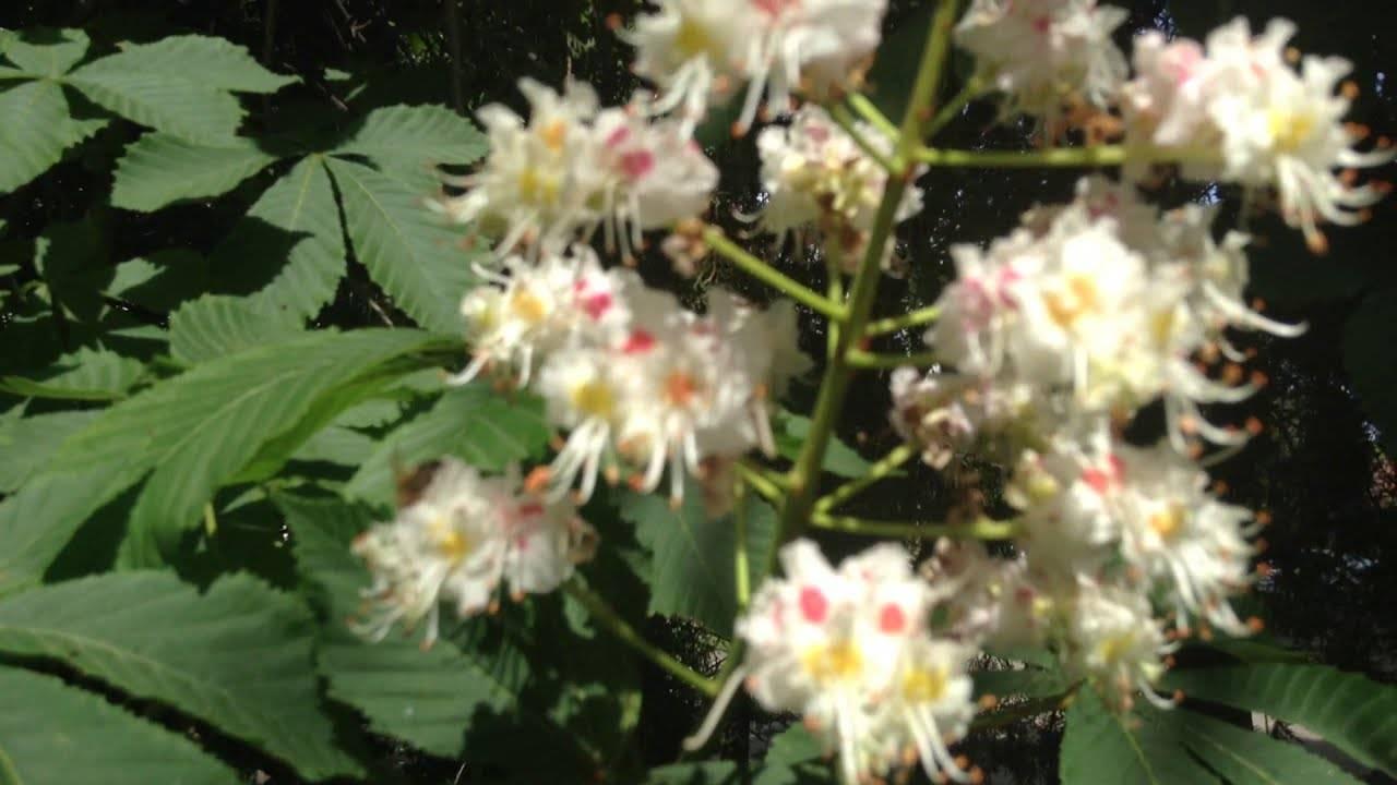 Почему декабрист сбрасывает бутоны: почему опадают или осыпаются нераспустившиеся цветы, что делать, если их скидывает здоровое растение, и как за ним ухаживать?
