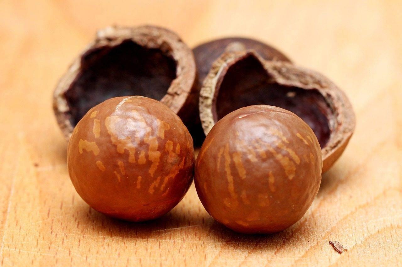 Польза макадамии: 105 фото свойств и качеств самых дорогих орехов в мире