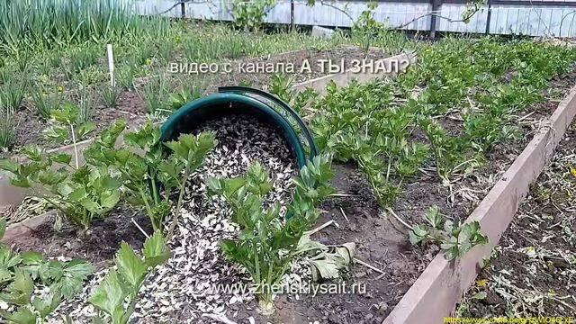 Шелуха от семечек как удобрение, как применять — особенности использования, отзывы