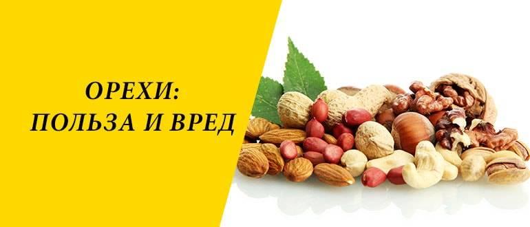 Самые полезные орехи для женщин и мужчин, вред и польза для сосудов