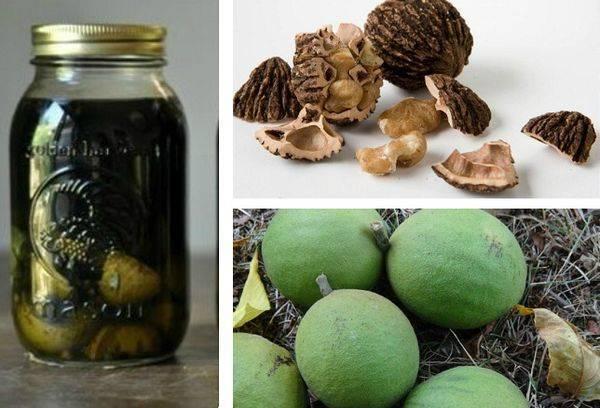Черный орех: полезные свойства и противопоказания, применение