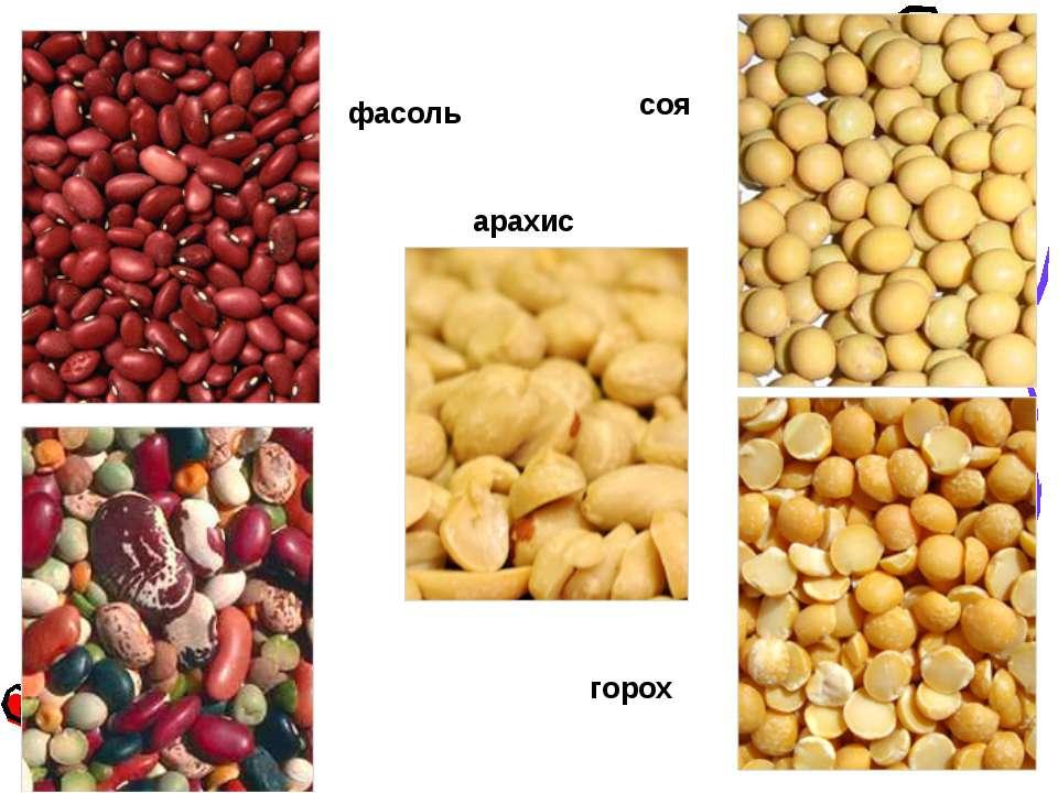 Описание 8 лучших видов и сортов арахиса, тонкости выращивания