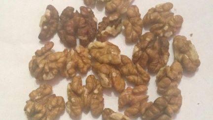 ✅ болезни и вредители грецкого ореха, лечение и борьба с ними, фото - tehnoyug.com