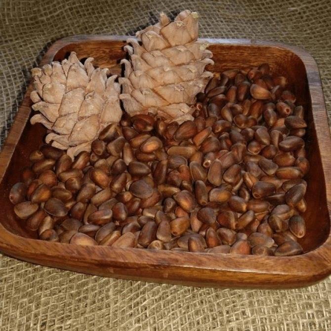 Хранение кедровых орехов в домашних условиях: лущеных, в скорлупе