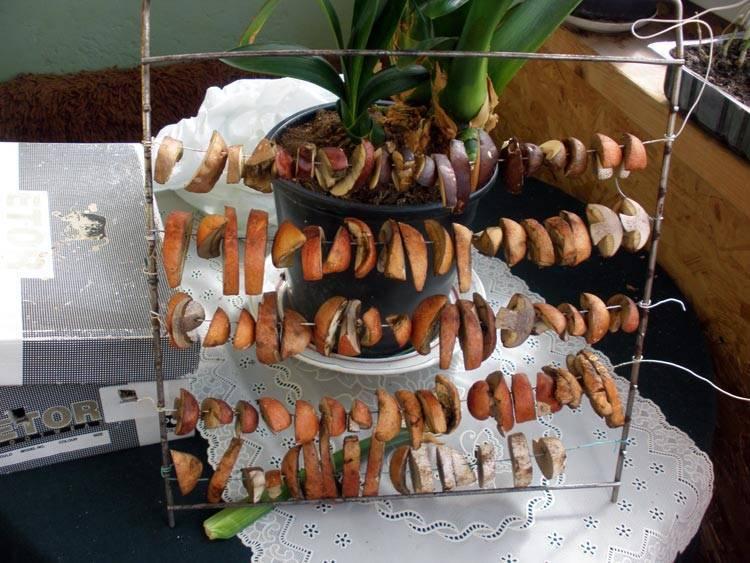 Как засушить грибы. как сушить грибы в домашних условиях | здоровье человека