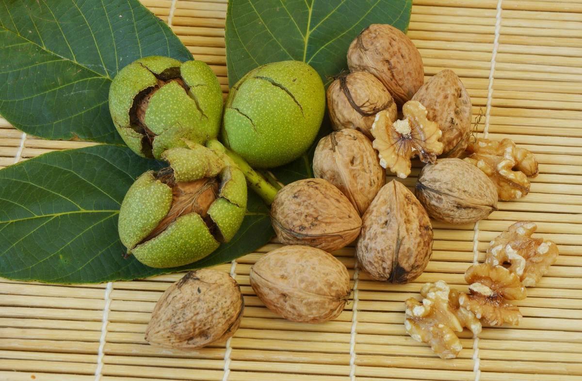 Почему не плодоносит ваш грецкий орех и что с этим делать?