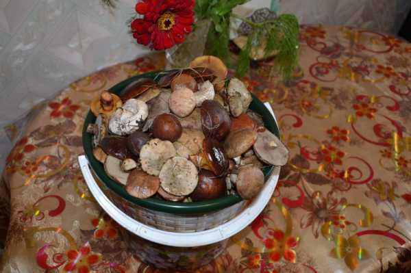 Как солить грибы в домашних условиях — пошаговый простой и быстрый рецепт в банках горячим и холодным способом. как солить грибы - разные способы заготовки лесного урожая