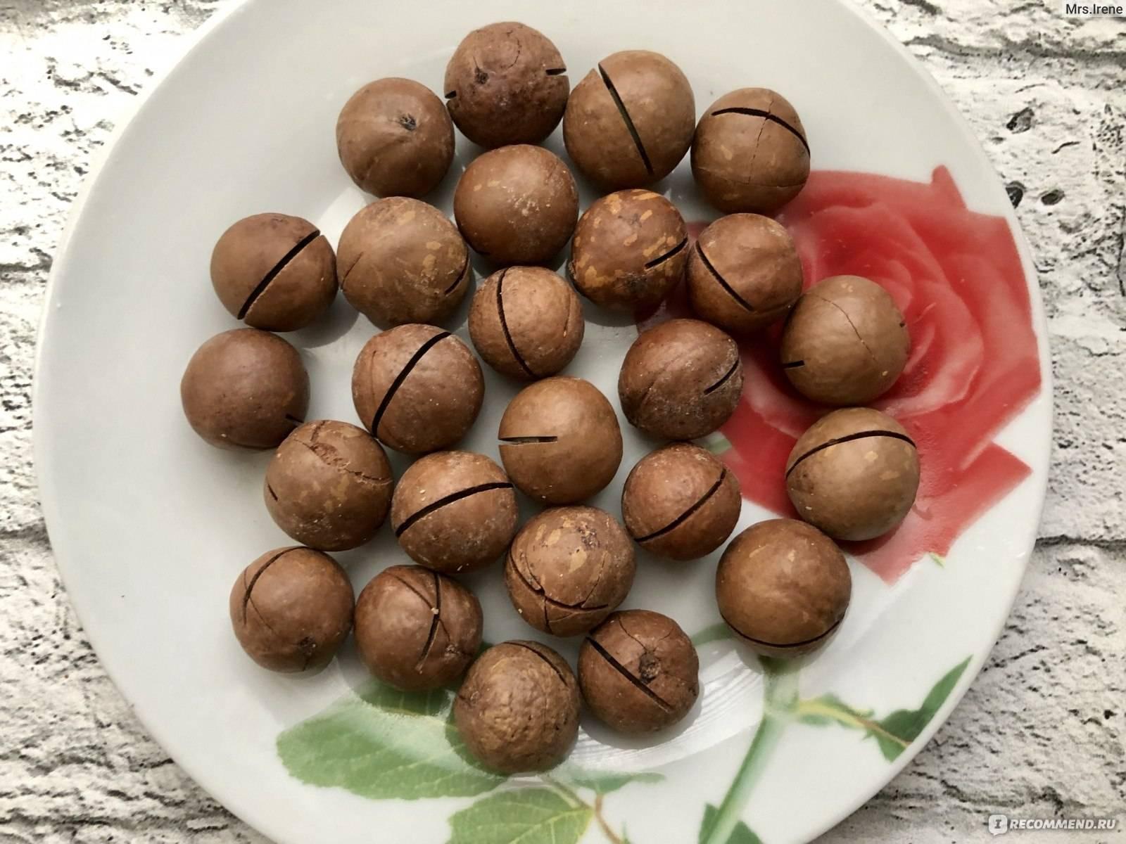 Как растет макадамия: полезный австралийский орех