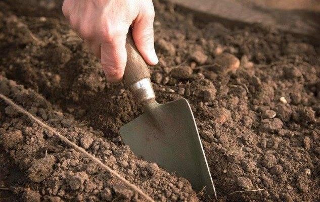 Выбираем сидераты чтобы посеять на лето – помогаем почве