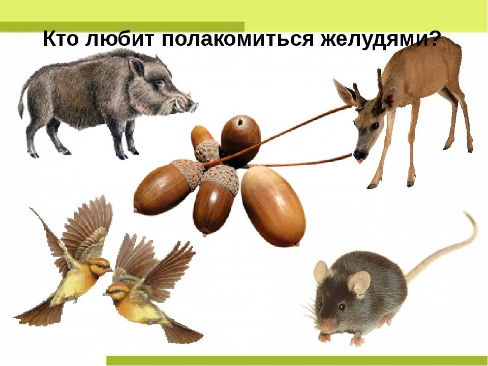 Кто может съесть лису в лесу – кто ест зайцев из животных?