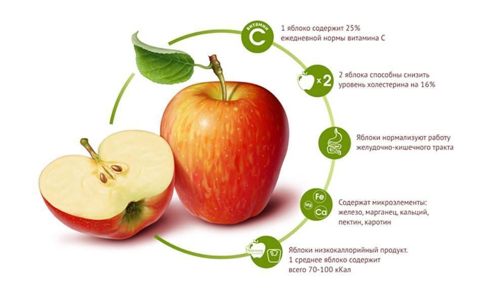 Косточки яблок: польза и вред, состав, можно ли есть | zaslonovgrad.ru