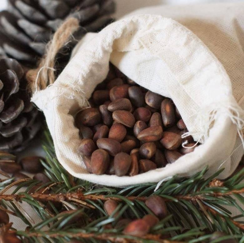 Это нужно знать, чтобы сохранить кедровые орехи в домашних условиях