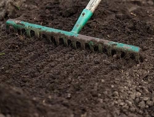 Когда и как сеять сидераты осенью и весной, нужно ли их закапывать в почву