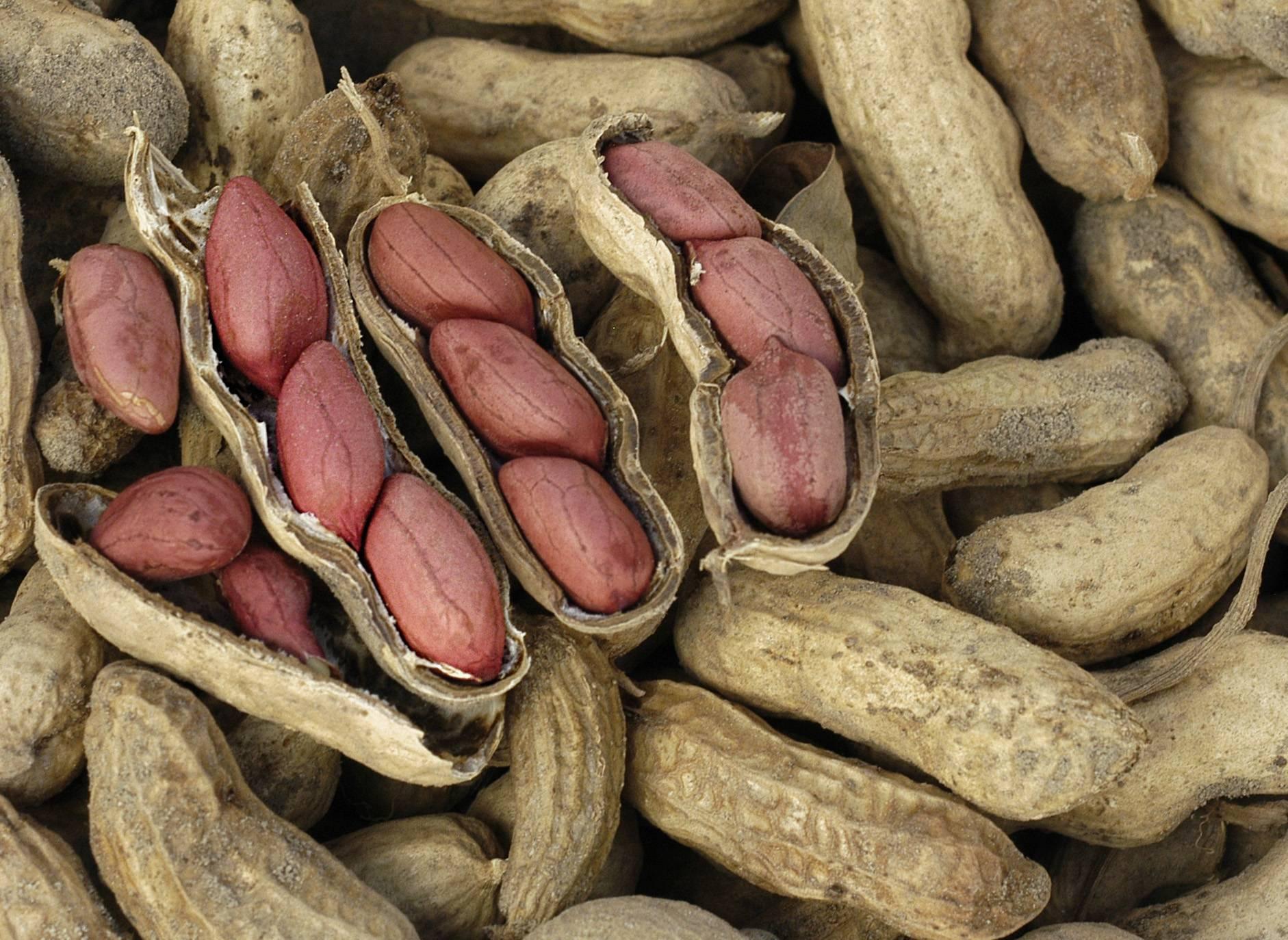 В каких странах растет арахис