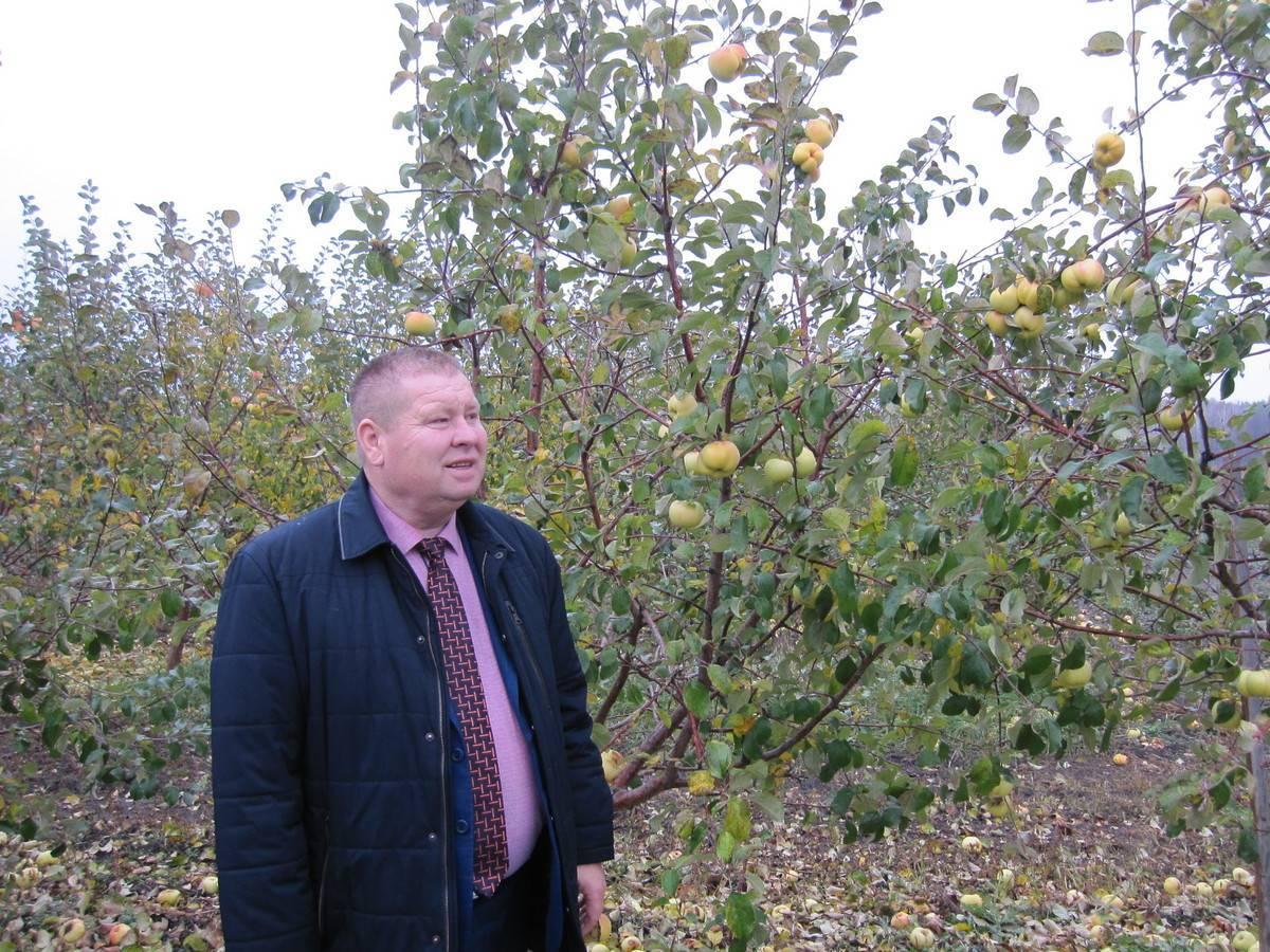 Орех маньчжурский: описание дерева, применение, выращивание