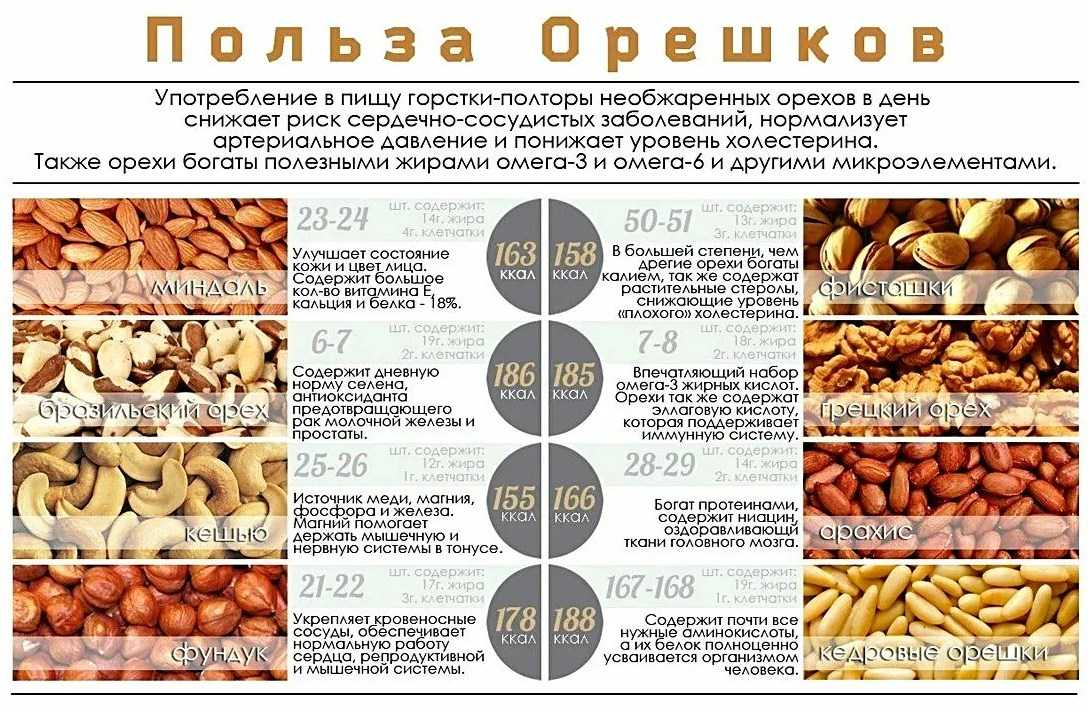 Орехи и их особенности