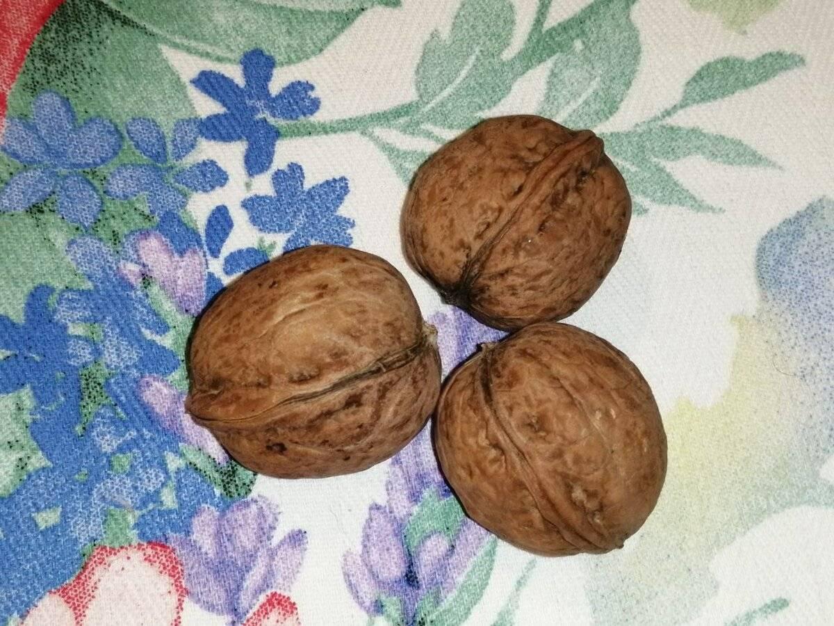 Листва маньчжурского и грецкого орехов как удобрение