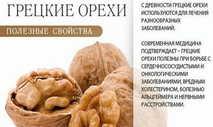 Грецкие орехи: польза, вред для здоровья организма человека, противопоказания, и кому нельзя есть, можно ли при похудении, в чем лечебные свойства отвара, ядер?
