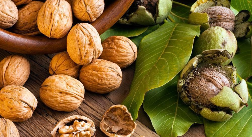 Орехи при беременности: полезные свойства и противопоказания