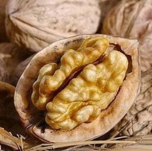 В чем польза грецких орехов при грудном вскармливании и когда продукт противопоказан? правила употребления