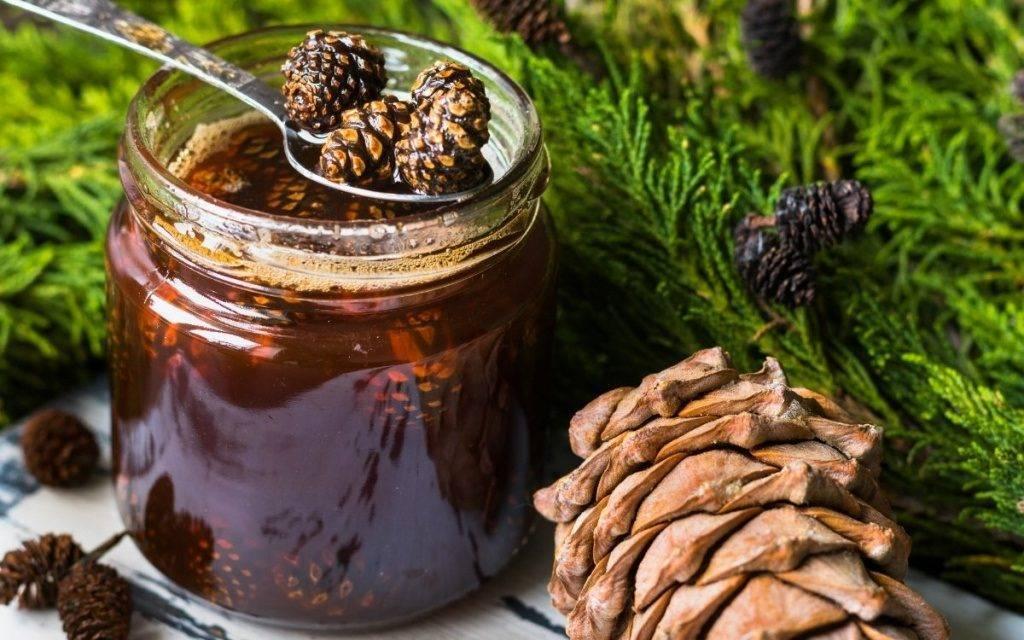 Варенье из сосновых шишек — полезные свойства и 9 способов его приготовить