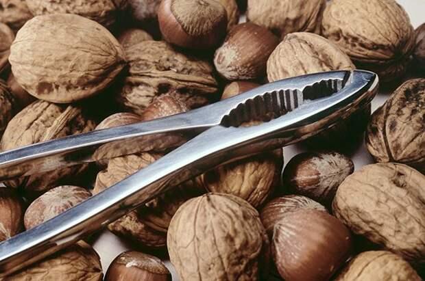Есть, но не переедать. за что мы любим орехи? здоровье — все новости (вчера, сегодня, сейчас) от 123ru.net